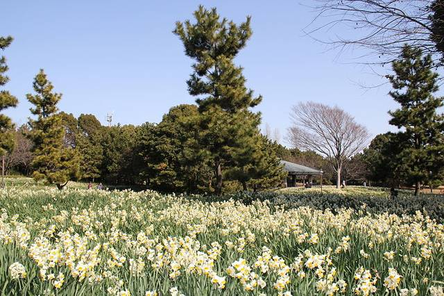 The Kasai Rinkai Park has been an area of natural beauty since the 1980s