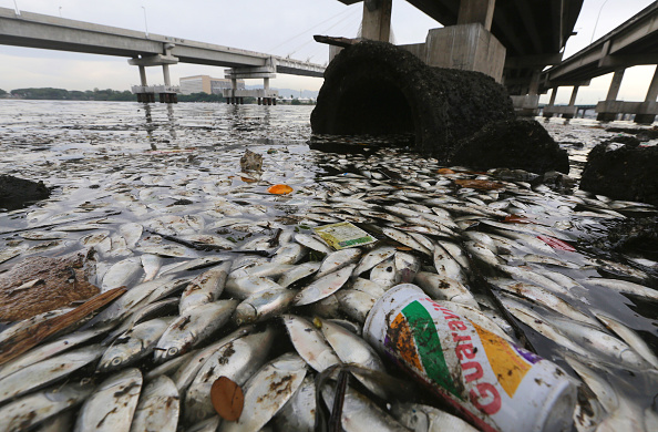 Thousands of dead fish have been washed up in Guanabara Bay, venue for sailing during Rio 2016 ©Getty Images