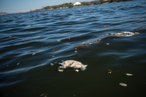 Pollution concerns on Guanabara Bay remains a major worry ahead of Rio 2016 ©AFP/Getty Images