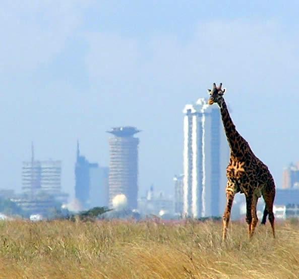 Nairobi_with_giraffe_in_foreground